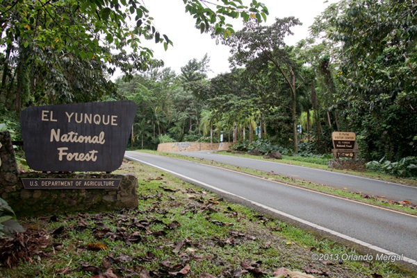el-yunque-national-rainforest-01