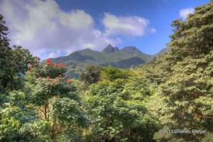el-yunque-national-rainforest-05
