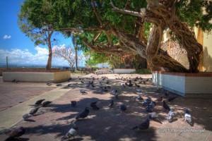 Pidgeon's Park / El Parque de las Palomas