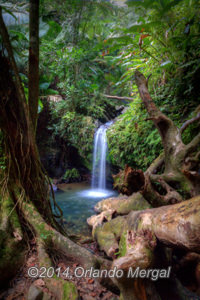 El Yunque NAtional Rainforest. Click on image to see it larger