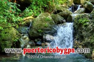 el-yunque-national-forest-puerto-rico-by-gps-orlando-mergal-600px-2014-0063