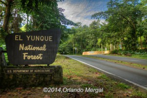 Entrance to El Yunque National Forest